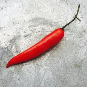 Chili i närbild på zinkbord