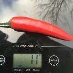 Röd chili på en matvåg